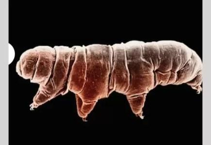 Éste es el animal más resistente del mundo - Fotos