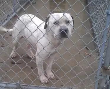 De locos: condenan a muerte a un perro por ser gay