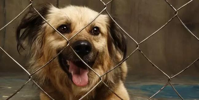 Adopción de perros: Lugares donde adoptar a tu mascota