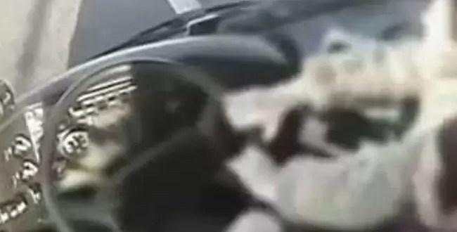 Mujeres evitan tragedia al desmayarse chofer de colectivo - Video