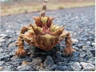 Éste es el animal más extraño del mundo - Fotos