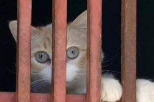 Cómo nació la expresión 'Aquí hay gato encerrado'