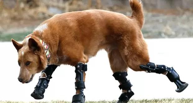 Video del primer perro biónico del mundo