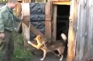 Video insólito: así evita este perro que lo bañen