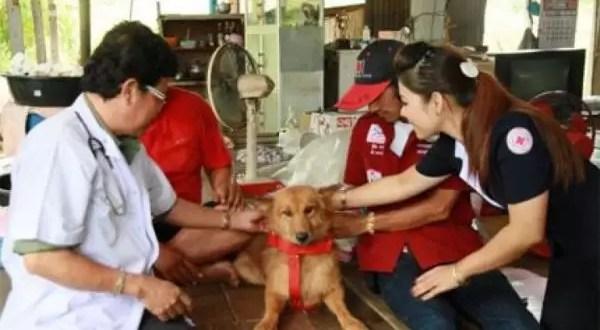Bebé se salva de milagro gracias a un perro