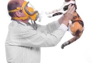 Entérate qué provoca la alergia a los gatos