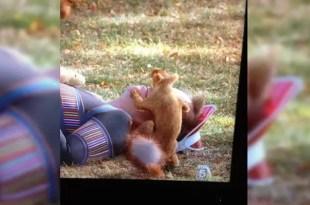 Foto insólita: un hombre es abusado por una ardilla