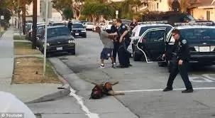 Video fuerte: Perro asesinado frente a su dueño por un policía