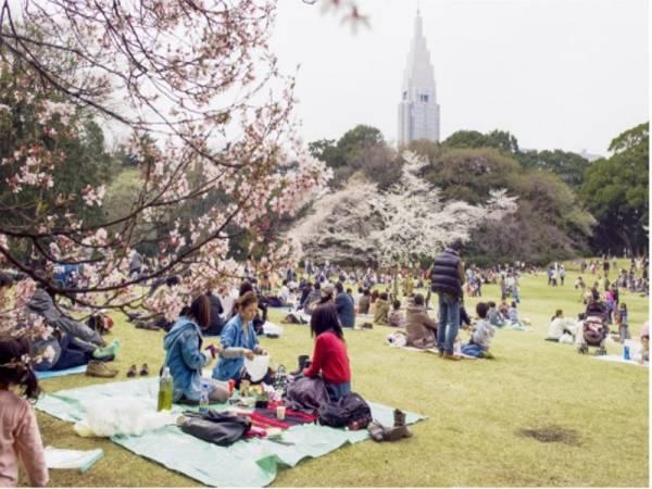 Terokai cara terbaik untuk menikmati penawaran masa terhad bunga sakura di Jepun!