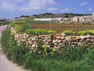 Stone walled terraces, Malta