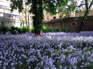 Flowers in Wadham College