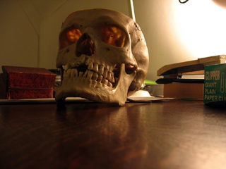 Human skull in Wadham College, Oxford