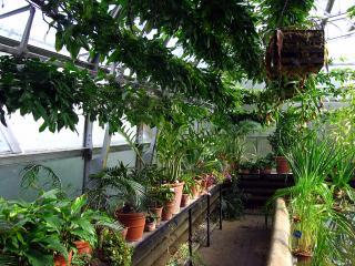 Greenhouse in the Botanic Gardens