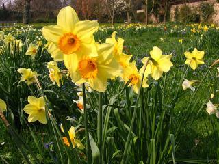 Wadham garden flowers