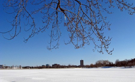 Branches over Dow\'s Lake, Ottawa