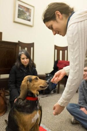 Bella the St. John Ambulance therapy dog 2/3