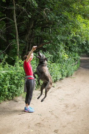 Dog jumping for stick