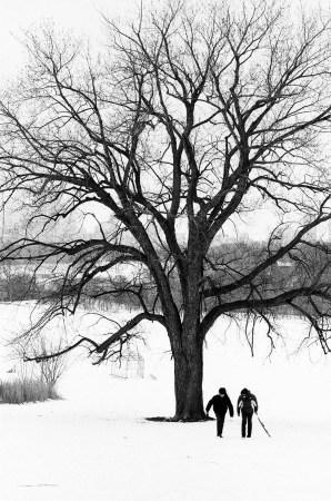 Toronto snowscape