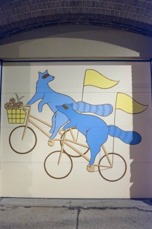 Raccoons on bicycles