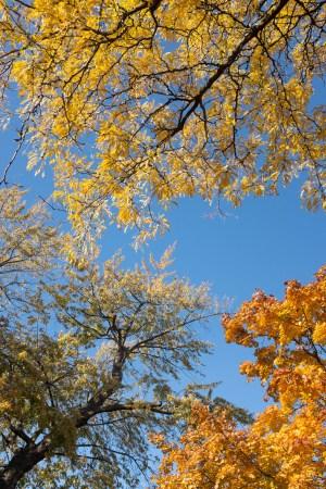 High Park trees