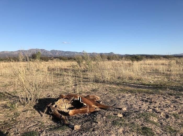 animal muerto - Grupo México deja sin hospital a Río Sonora