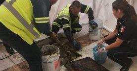 Resultado de imagen para hallan droga en drenaje del aicm