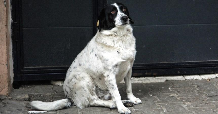 1d4dee4c207a17766fba0521fc3ea0dcace7f185 - Un perrito callejero irrumpe en sesión de fotos de una quinceañera y se roba la atención de todos - #Noticias