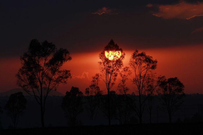 cuartoscuro 697811 digital - ¿Cuándo comienza la primavera en México?, ¿qué la provoca?, ¿cómo ocurre este fenómeno natural?