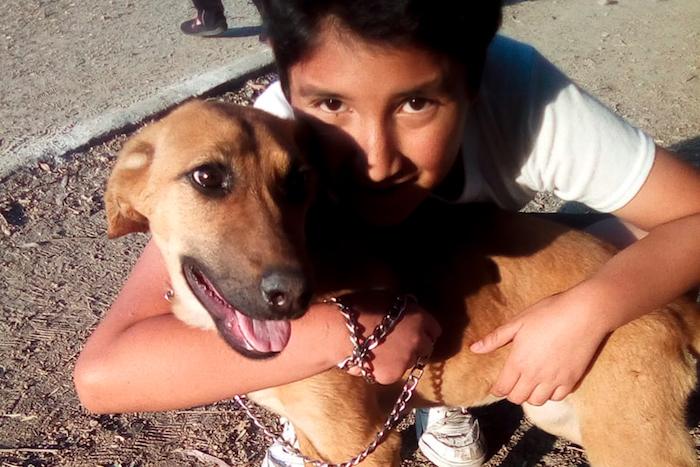 perritosabandonados covid19 especial02 - Perros callejeros son olvidados por COVID-19; un centro de CdMx promueve adopciones a distancia