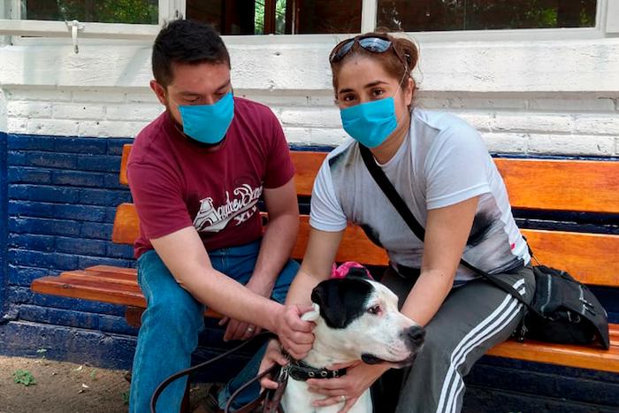 perritosabandonados covid19 especial03 1 - Perros callejeros son olvidados por COVID-19; un centro de CdMx promueve adopciones a distancia