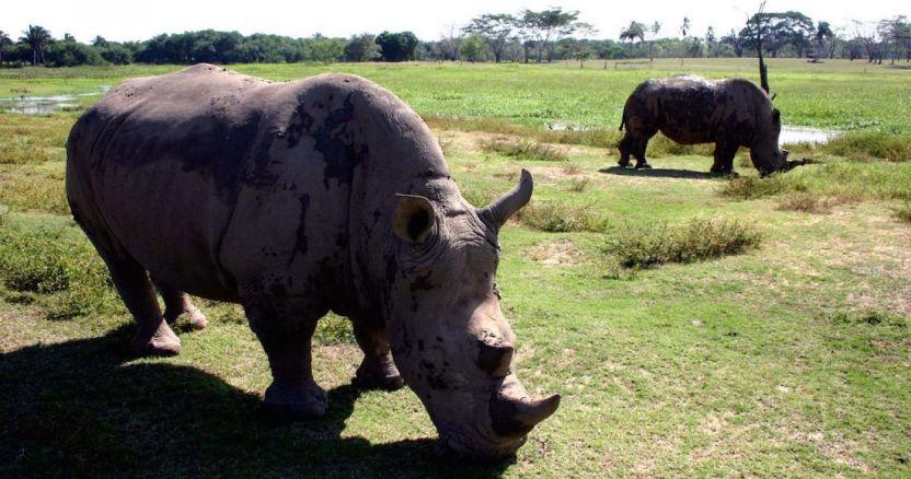 rinoceronte - Arqueólogos descubren cómo eran las camas hace 200 mil años; estaban hechas de hierba y ceniza