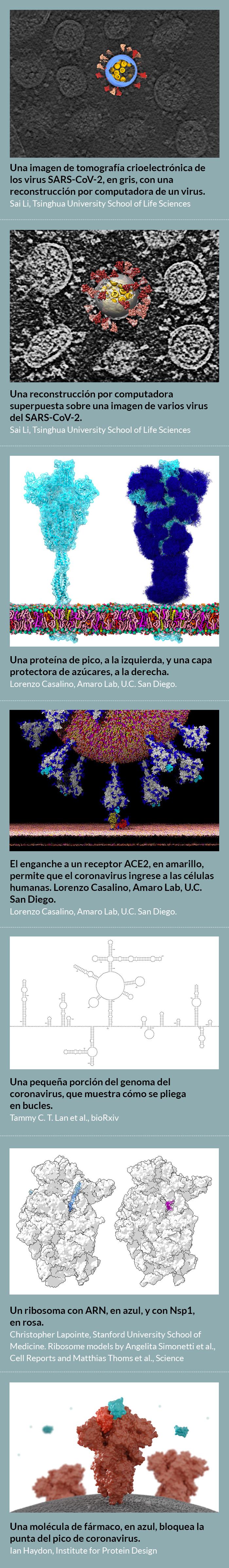 Las imágenes del coronavirus como nunca antes se había visto 1