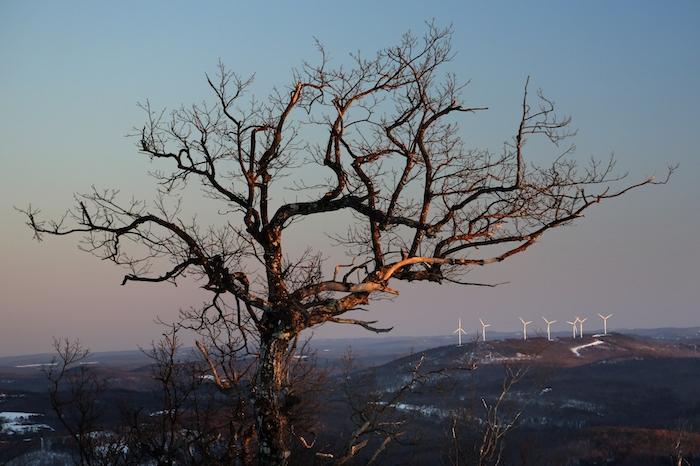 Fotografía de archivo del 19 de marzo de 2019 de aerogeneradores en un parque eólico sobre una colina atrás de un gran árbol en Canton, Maine.