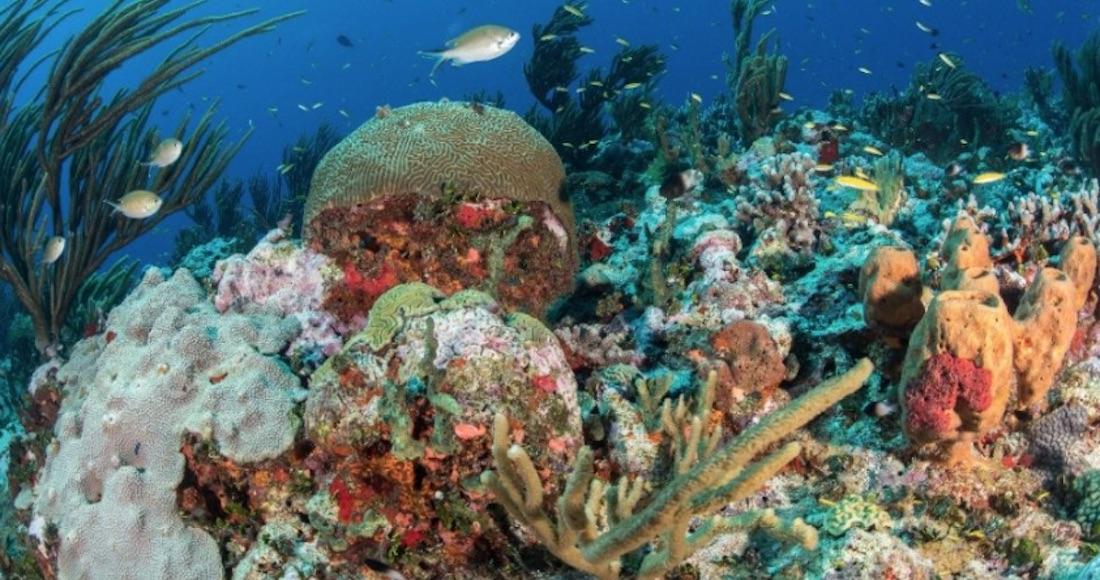 Un grupo de científicos busca documentar el daño humano a los arrecifes de  Yucatán - SinEmbargo MX