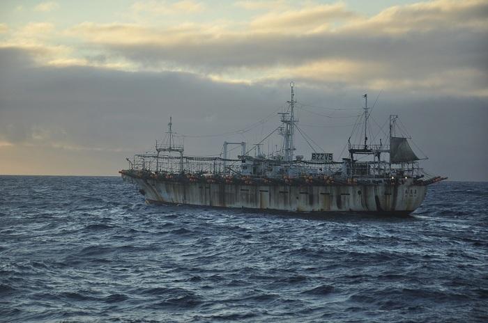 pesca de calamar8