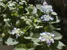 garden-20