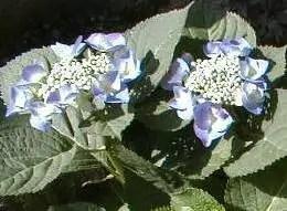 garden-21