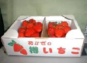 p-ichigo