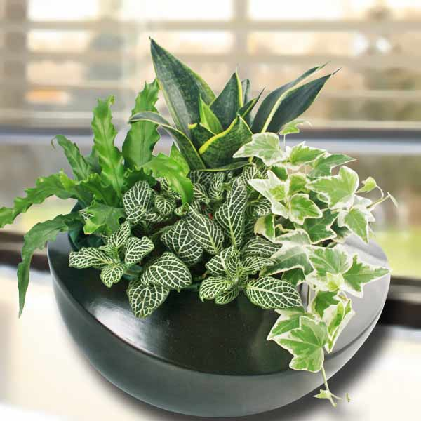 Singapore Indoor Plants  Table Garden  Mini Plants