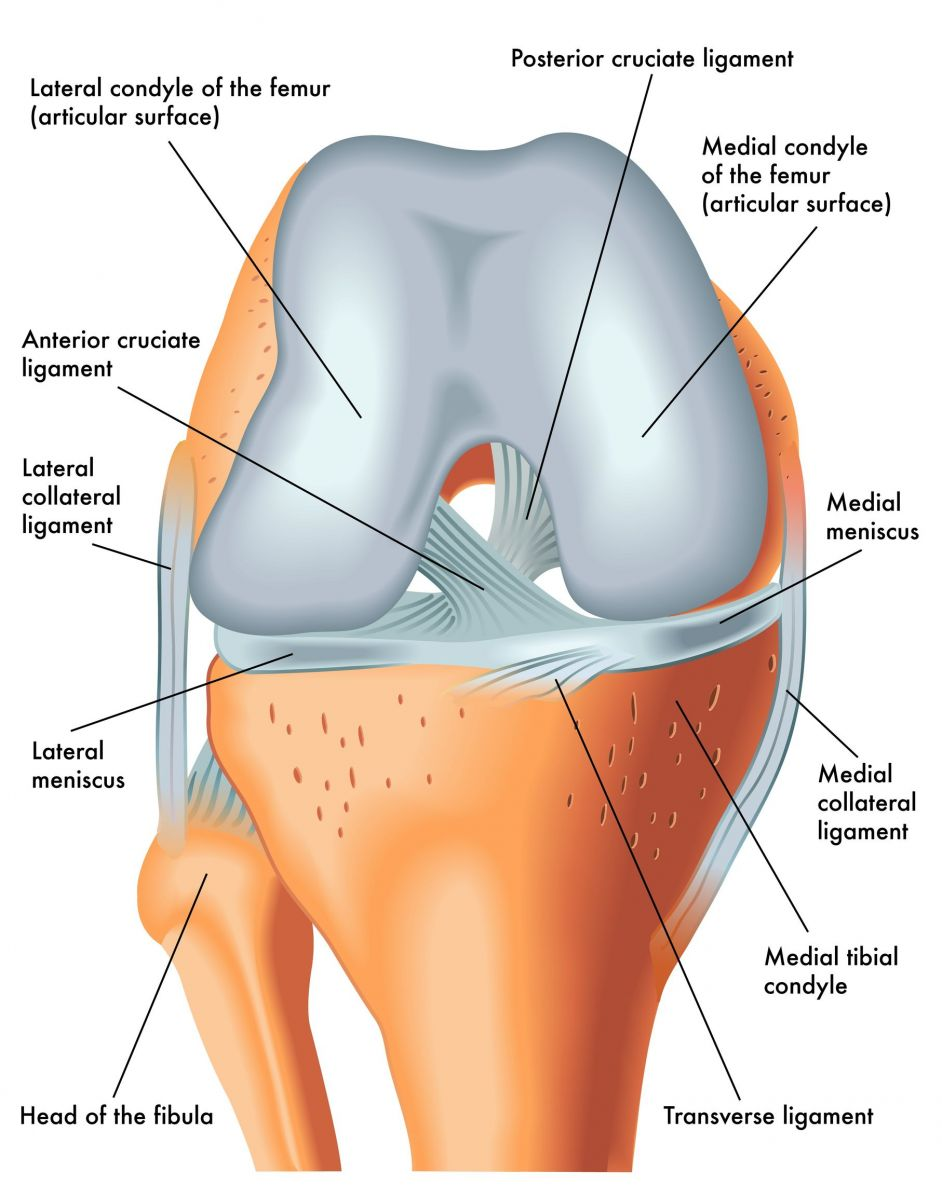 front leg ligament diagram 95 honda accord engine knee injuries singapore | tears in acl, mcl & pcl