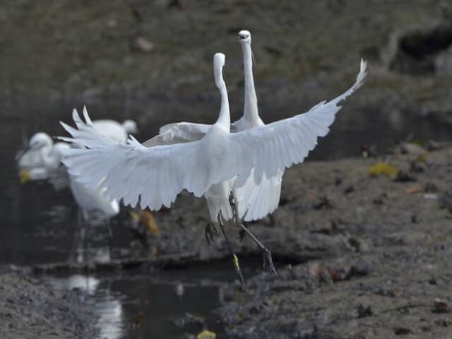 Bird-watching-at-Sungei-Buloh-2