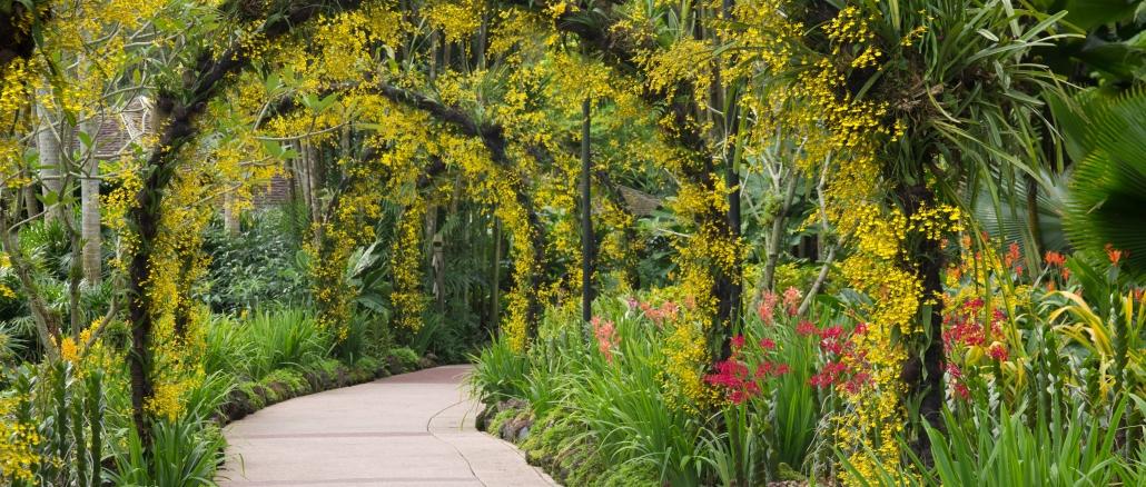 Singapur Botanischer Garten Sollte Man Nicht Versäumen