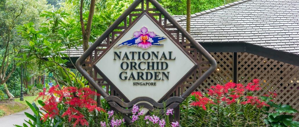 Singapur Orchideengarten Ist Einfach Wunderschön