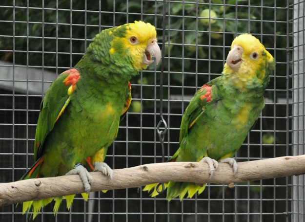 kitchen sink amazon best new gadgets double yellow-headed facts, care as pets, pictures