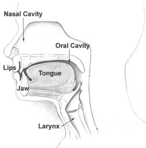 Nose Mouth and Throat