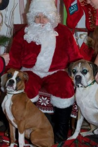 millie dempsey santa paws too many helpers (2)