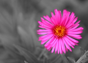 Beautiful pink flower overcoming gray backg