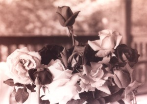 love in black and white rose