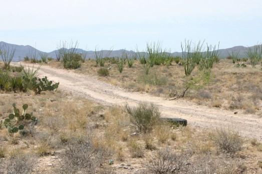 Desert with dirt road