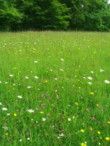 meadow with flowers - peace and rest